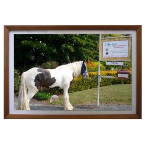 Framed Horse Photo
