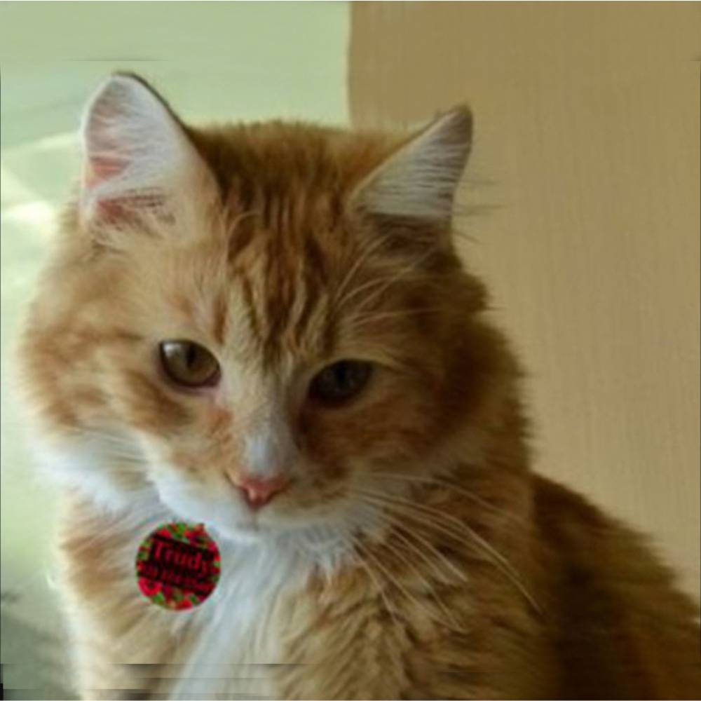Cat Wearing Designer pet Tag
