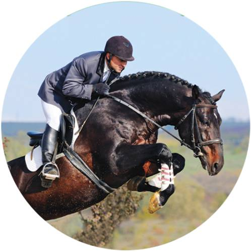 Horse Jump Male