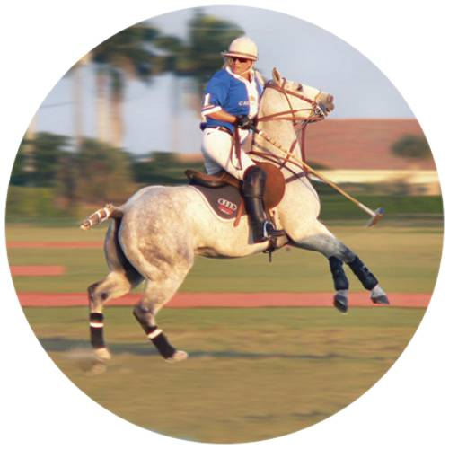Horse Polo-Female