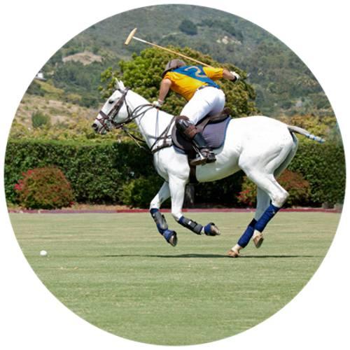 Horse Polo-Male